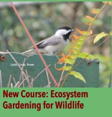 The National Wildlife Federation has a really effective educational program that allows people to certify a home, school, church, or busines...