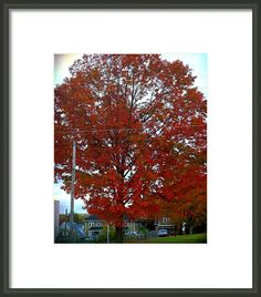 Firework Tree Framed Print By Shelly Weingart
