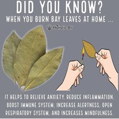 Do you burn bay leaves❓❓❓ Health Hacks! ➡️ IG 👉🏽 Do you burn bay leaves❓❓❓ Health Hacks! Burning Bay Leaves at home is healthy 😁 I love burning bay leaves. Bay leaves have anti-anxiety properties. Natural Health Remedies, Natural Cures, Natural Healing, Natural Life, Herbal Remedies, Holistic Healing, Natural Treatments, Health And Wellness, Health Tips