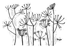 Cow Parsley http://www.wilsonstephensandjones.com