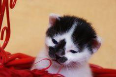 Hello little kitty
