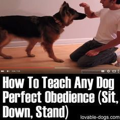 How To Teach Any Dog Perfect Obedience (Sit, Down, Stand) Read more in http://natureandhealth.net/ #DogObidience