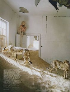 """White Mischief"": Agyness Deyn in Namib Desert by Tim Walker for UK Vogue. #desert #cheetah #hide #sand #tim_walker #agyness_deyn"