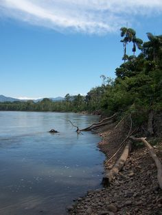 The amazonian virgin forest  country : Brazil - Peru