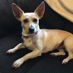 Alberta Dog Rescue Adoption From Mexico