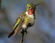 1000+ images about Birds of Southern California on ...