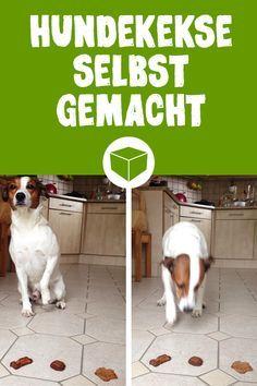 DIY Hundekekse die Dein Hund lieben wird. Ob mit Leberwurst, Karotten, Bananen oder Hüttenkäse. Diese 3 Rezepte für Hundeplätzchen wir Dein Vierbeiner lieben.