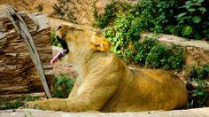 EL ZOO DE BARCELONA #Zoo #ZooBarcelona #Barcelona #BCN #dosmaletas http://www.dosmaletas.com/2014/06/el-zoo-de-barcelona.html