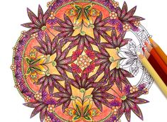 8 Amazing Coloring Books For Adults to Challenge the Artist - The Mandala Coloring Book