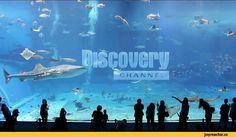 imagenes de discovery channel - Поиск в Google