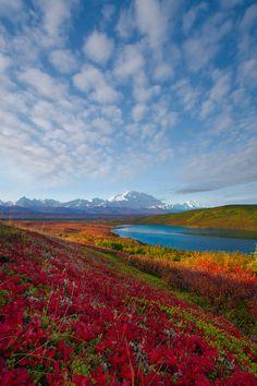 Fall in Denali National Park, Alaska