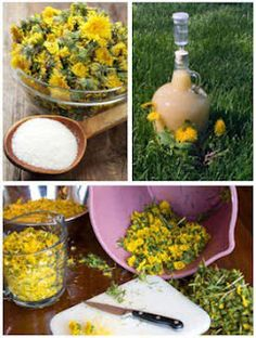 Make Dandelion Wine, Jelly, Syrup & More - HOMESTEAD PREPPING SURVIVALING #health