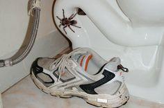 9 astuces naturelles pour faire fuir les araignées de la maison
