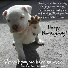 Happy Thanksgiving! Love Your Pet, Happy Thanksgiving, I Love Dogs, The Fosters, Pitbulls, Pets, Animals, Happy Thanksgiving Day, Animales