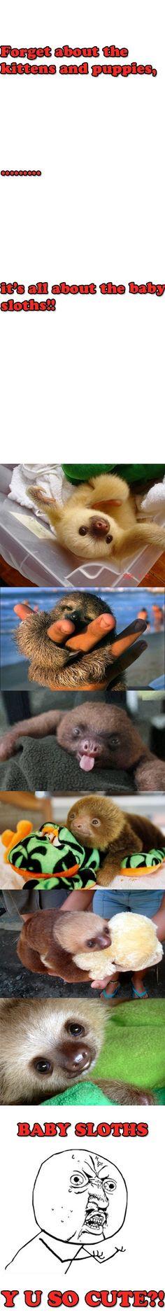 baby sloth...
