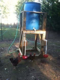 Automatic chicken waterer my hubs made for me!!  :)