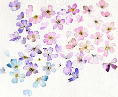 Beautifully delicate watercolor flowers ~ artist Holly Brinkworth  - would love this but grayscale