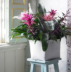 This look offers a range of choices: you can use all the same Bromeliads or use different ones in the same fashion. You can add variety by working with different sizes of pots and plants. Home And Garden, Modern Classic, Growers, Buy Plants, Bulb, Bulb Flowers, Garden Center, Home Buying, Indoor Plants