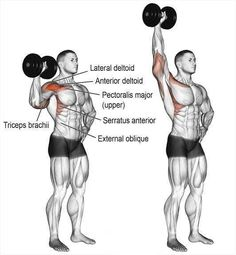 Dumbbell one arm overhead press. A unilateral compound push exercise. Main muscles worked: Anterior Deltoid Lateral Deltoid Supraspinatus Triceps Brachii Middle and Lower Trapezii Serratus Anterior Clavicular (upper) Pectoralis Major Obliques Psoa Fitness Workouts, Fun Workouts, At Home Workouts, Fitness Hacks, Overhead Press, Chest Workouts, Dumbbell Workout, Deltoid Workout, Muscle Fitness