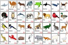 Развивающие карточки для детей сделать самим своими руками карточки животные