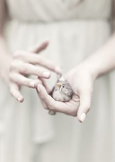 little bird Ana Rosa Laura Makabresku, Zebra Finch, We Are The World, Bird Feathers, Beautiful Birds, Pretty Birds, Cute Animals, Tumblr, In This Moment