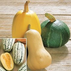 Organic Winter Squash Harvest Blend in The Big Seed Book from Park Seed on shop.CatalogSpree.com, my personal digital mall.