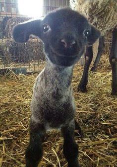 14. Un chat et un mouton bébé qui ont le sourire