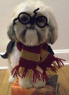 #cute #funny #Harry Potter #Dog
