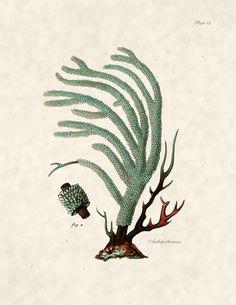 Beach Decor Coral illustration Coral Print for Coastal Wall Decor. $10.00, via Etsy.