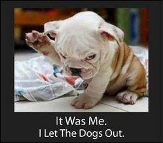 Proof who really let the dogs out! by Jason Neumann, via Flickr