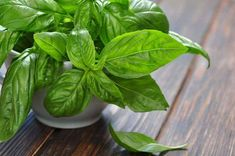 Quick-growing fragrant and medicinal herbs Pink Perennials, Cabbage Juice, Types Of Christmas Trees, Types Of Herbs, Herbs Indoors, Garden Types, Growing Herbs, Fresh Basil, Natural Home Remedies