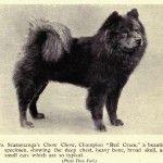 1910 Ms. Scamaranga kutyája, red blaze. Dog Evolution - Chow-Chow - Kutya Portál. Kutya Evolúció - Chow-Chow - Kutya Portál.
