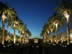 Alpine, Atherton, Laguna Beach, Huntington Beach Landscape Lighting Design and Installation by Artistic Illumination Outdoor Trees, Outdoor Garden Lighting, Plant Lighting, Tree Lighting, Unique Lighting, Outdoor Gardens, Lighting Ideas, Palm Tree Lights, Palm Trees