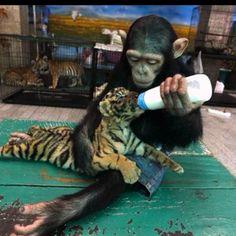 awwwwwww!!!! freaking adorable!!