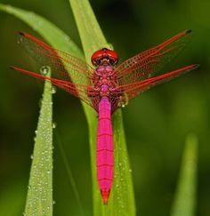 Observing nature is such a fun pastime -guaranteed to inspire the mind and heart. Shamanically the dragonfly represents making your dreams come true. For more shamanic insight, see the book, Shamanic Gardening: Timeless T Beautiful Bugs, Beautiful Butterflies, Amazing Nature, Beautiful World, Flying Insects, Bugs And Insects, Beautiful Creatures, Animals Beautiful, Mantis Religiosa