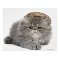 Persian Kitten (2 months old) wearing a straw Print Kittens Cutest, Cats And Kittens, Cute Cats, Kitty Cats, Funny Cats, Cat In Heat, Feline Leukemia, Cute Baby Wallpaper, Persian Kittens