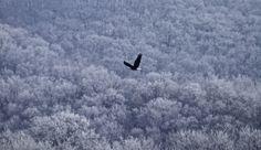 Bald Eagle in Prairie du Sac Wisconsin