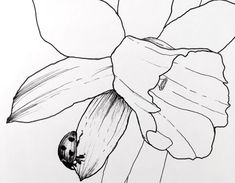 How to Draw Beautiful Floral Art with Pens Flower Art Drawing, Flower Drawing Tutorials, Pencil Drawings Of Flowers, Floral Drawing, Outline Drawings, Pencil Art Drawings, Art Drawings Sketches, Easy Drawings, Art Tutorials