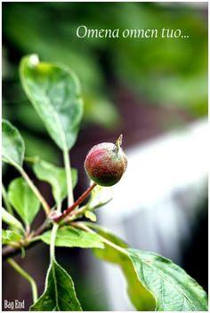 Tiny apple tree / Pieni omenapuu