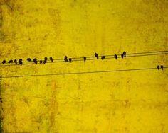 Bird+on+a+wire+bird+print+mustard+yellow+by+bomobob+on+Etsy,+$11.00