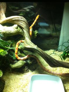 I need to find some cool branches like this for him