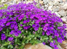 Herbs, Gardening, Plants, Lawn And Garden, Herb, Plant, Planets, Horticulture, Medicinal Plants