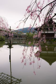 Kyoto, Japan...Cherry blossom festival. Beautiful city, Beautiful geishas, Beautiful people.
