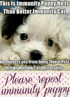 Seriously people STOP the scary posts I dont know if you think they are jokes, but they are definitely not funny, repost immunity puppy to help stop all threatening posts. Lets work to stop the scary posts.