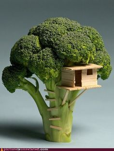 Broccoli Tree House  (Maybe not Fairy Princess, but still very fairy!)