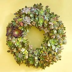 DIY Succulent Wreath. I love this idea for decorating outdoor spaces. And it low water so it's perfect for Southern living