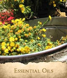 House of Aromatics » artisinal Distillers of Essential Oils