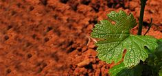 Istrian red soil...