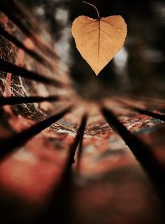 Use a wide aperture like to blur your background, otherwise known as bokeh. Photo by Explore. Autumn Photography, Creative Photography, Amazing Photography, Landscape Photography, Snapshot Photography, Poster Photography, Happy Photography, Photography Courses, Flash Photography