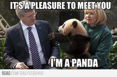 Yes, I'm Panda